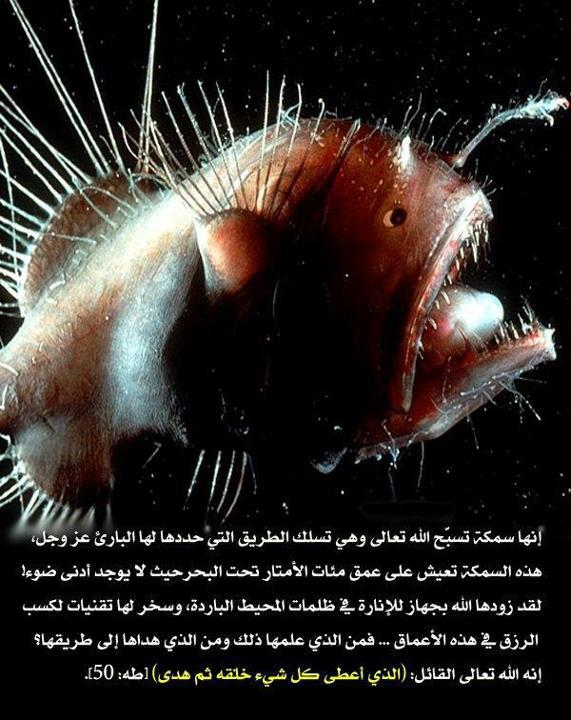Ikan yang didasar Laut
